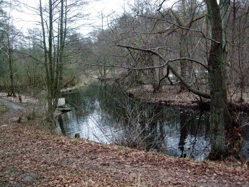 Skodsborg maratons klassiske rute er i naturskønne omgivelser.