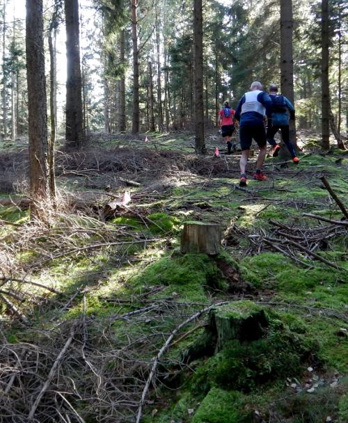 Løbere på vej gennem skoven