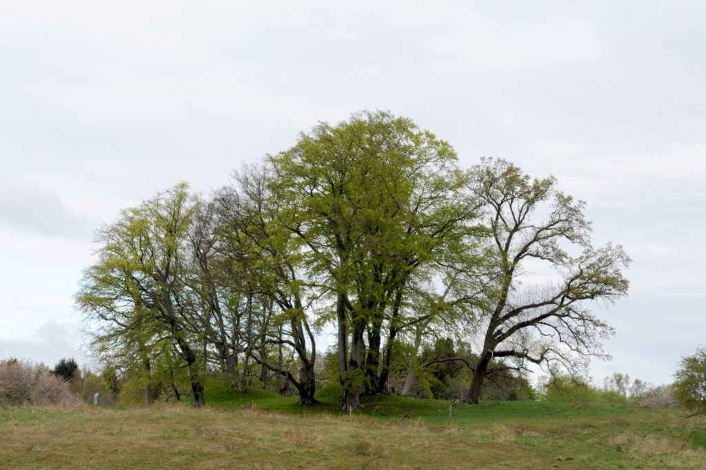 Rundhøj med træer på