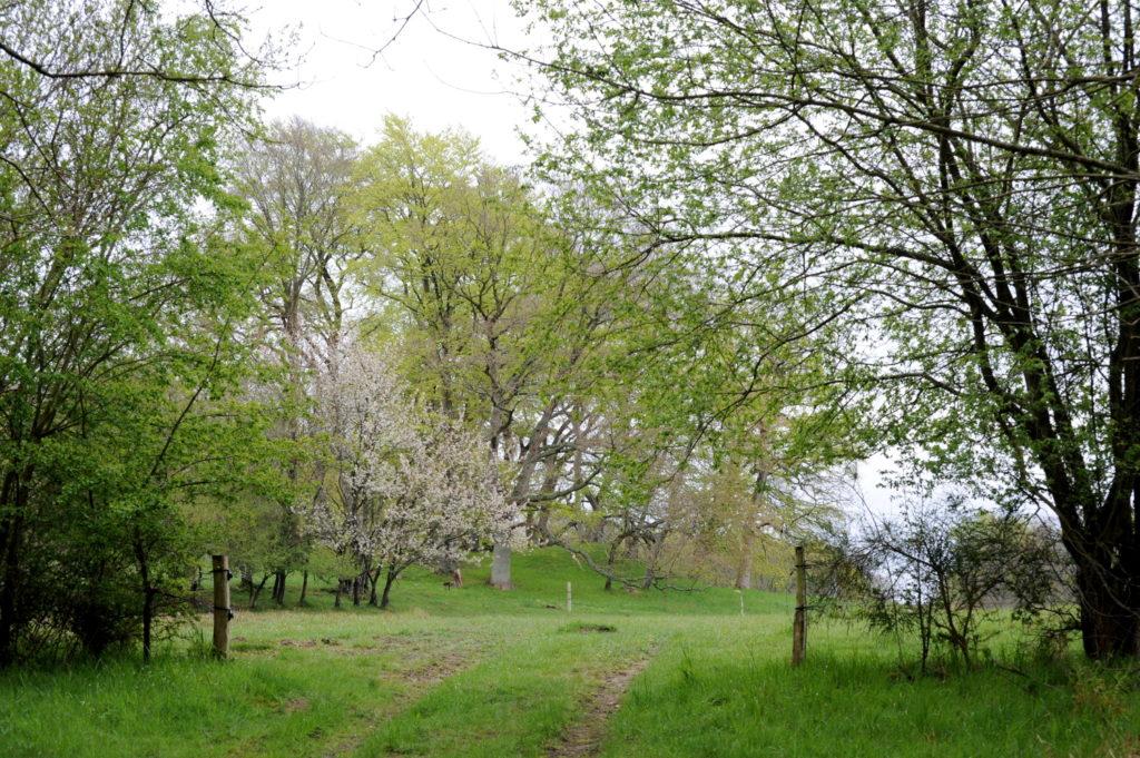 Landskab med træer på rundhøj