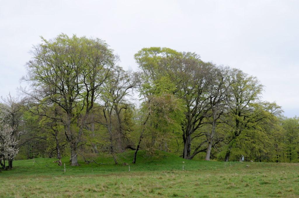Træer på oldtidsminde