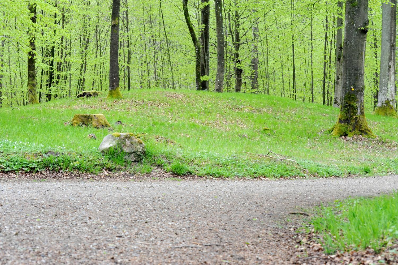 Rundhøj i grøn forårsskov