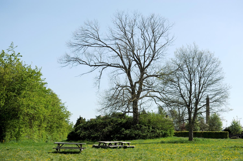 Rundhøj i grøn park. Tilgroet af små buske og et stort træ