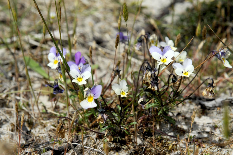 Blomster i blå, lilla og hvide nuancer - her primært hvide