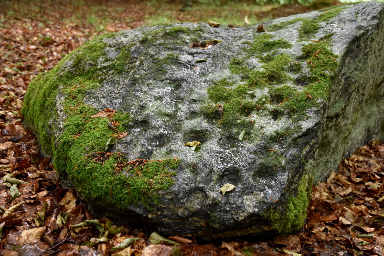Sten i skovbund med tydelige skåltegn