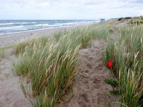 Sandklitter og havet i baggrunden