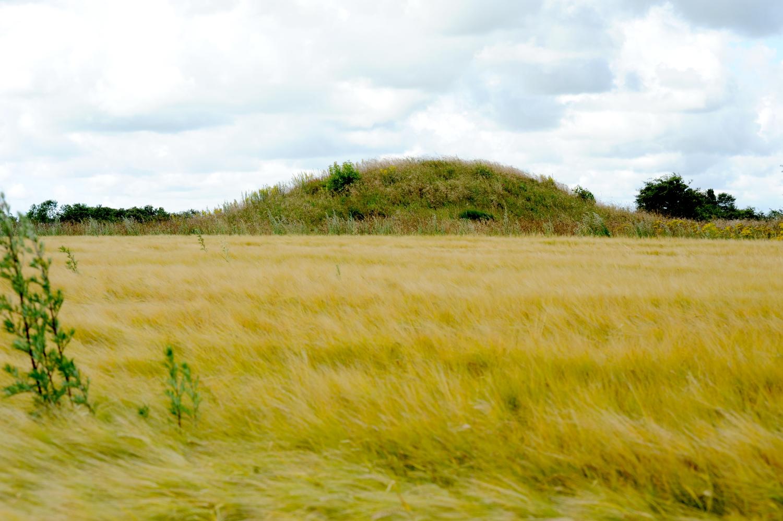 Rundhøj bag gylden kornmark