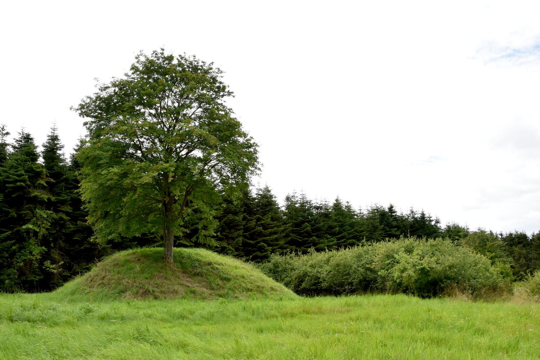Rundhøj med et enkelt træ på toppen. Bag højen ses en granskov