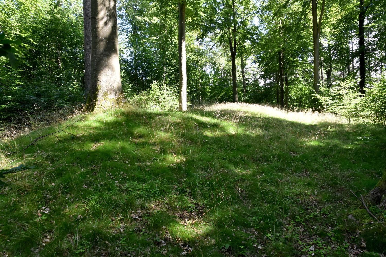 Langhøj (forhøjning i landskabet) i skov