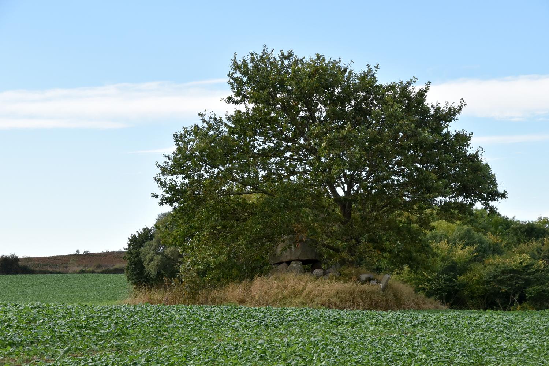 Forhøjning på en mark. Under et egetræ kan der ses en dysse