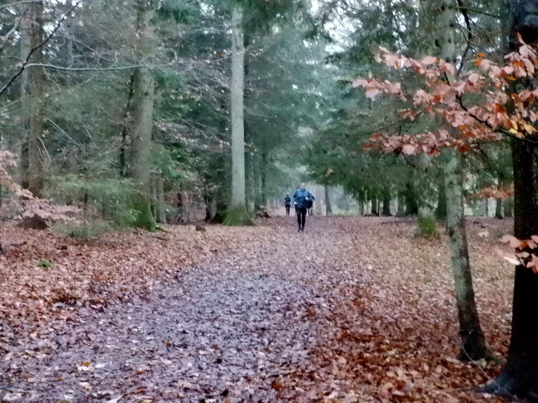 En løber på en vej dækket af visne blade i en skov