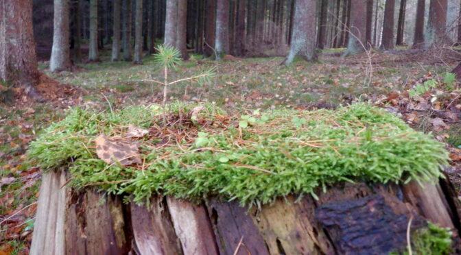 Maraton PopUp : i skoven