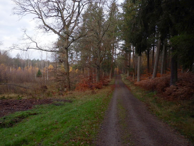 Skovvej med lysning ved den ene side