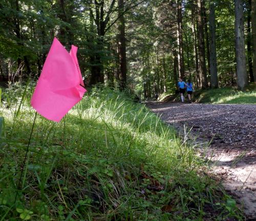Lyserøde markeringsflag, sko og to løbere på en skovvej
