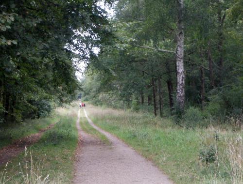 Skov. I det fjerne ses en lille flok løbere