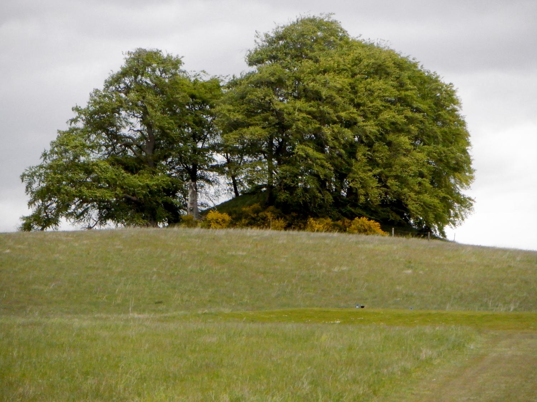 Rundhøj på græsmark. På højen står flere store træer