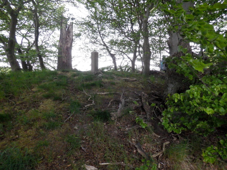 Under træerne på en rundhøj. I midten ses en fredningssten
