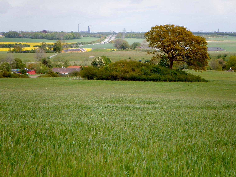 Rundhøj i en typisk landebrugslandskab. I det fjerne ses Energitårnet i Roskilde. På højen står et enkelt træ