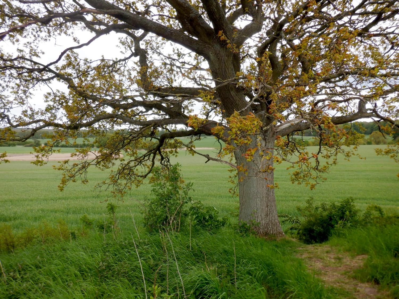 Oppe på højen ved træet