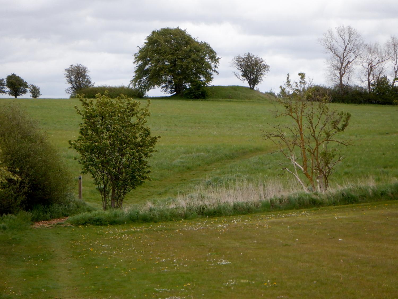 Gravhøj i grønt landskab. I forgrunden ses et par buske