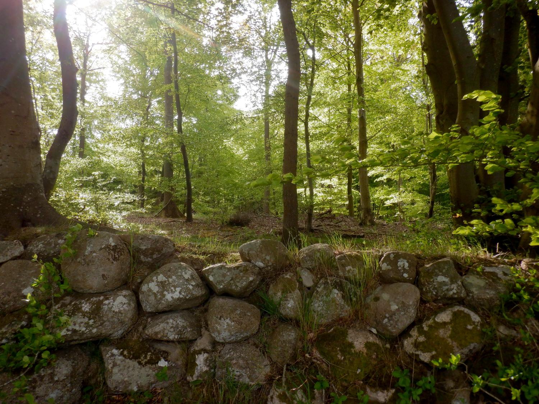Stendige foran grøn skov