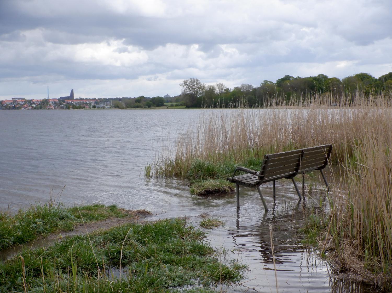 Bæk der stå i vand ved bredden af Roskilde Fjord