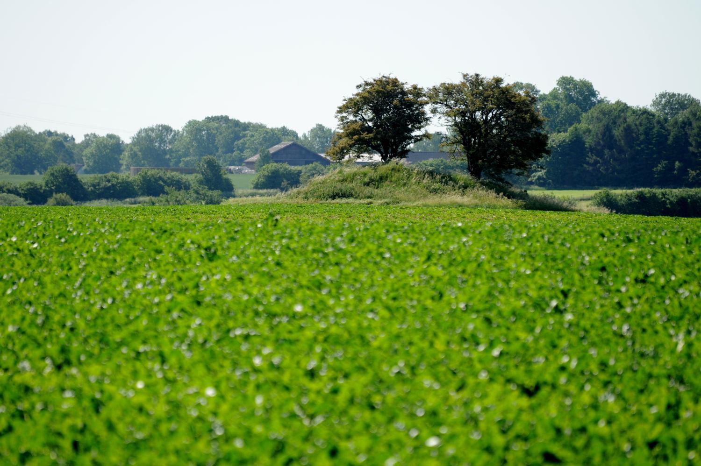 Rundhøj med to træer i landskab med grønne marker
