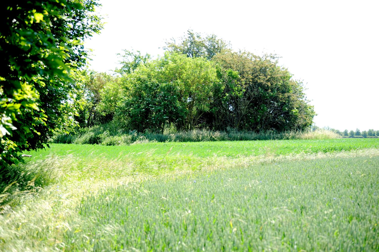 Rundhøj på grøn mark