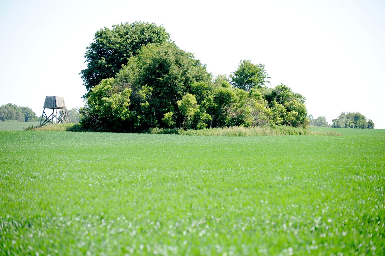 Rundhøj på grøn mark. Ved siden af står et jagttårn