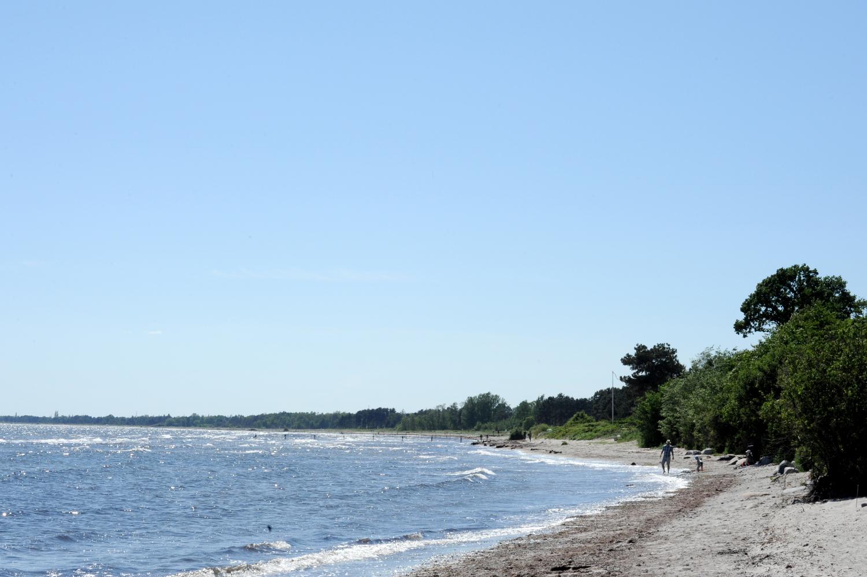 Strand og hav med blå himmel og tærer der grænser op til stranden
