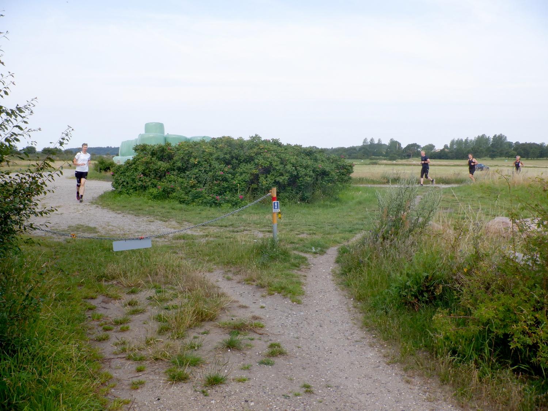 Løbere løber rundt om en busk