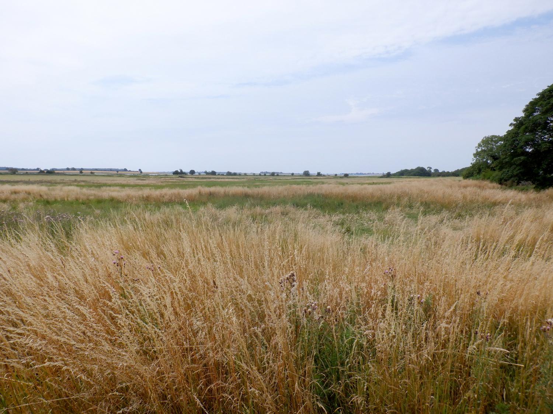 Fladt land med gyldent og grøn græs