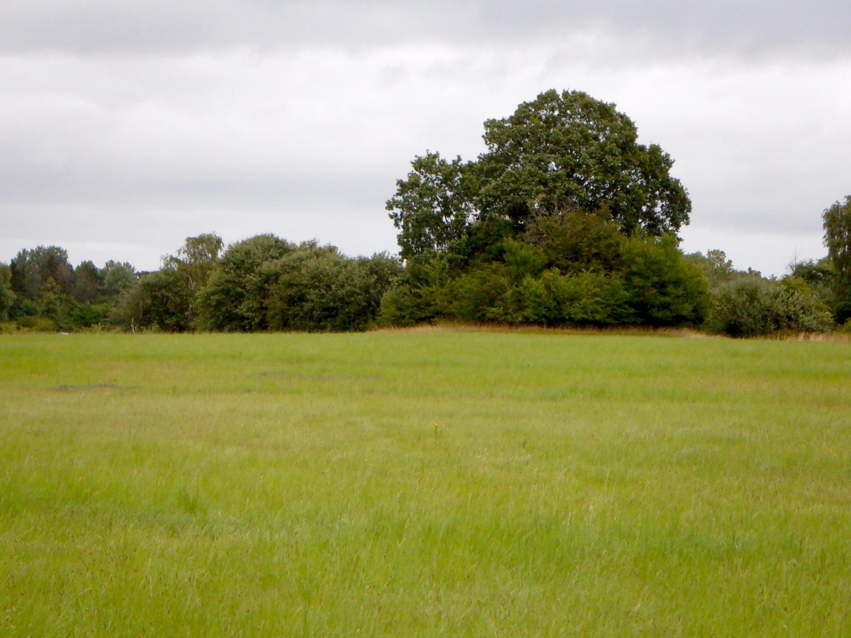 Gravhøj foran træbælte - bag græsmark. Højen er dækket af træer og buske