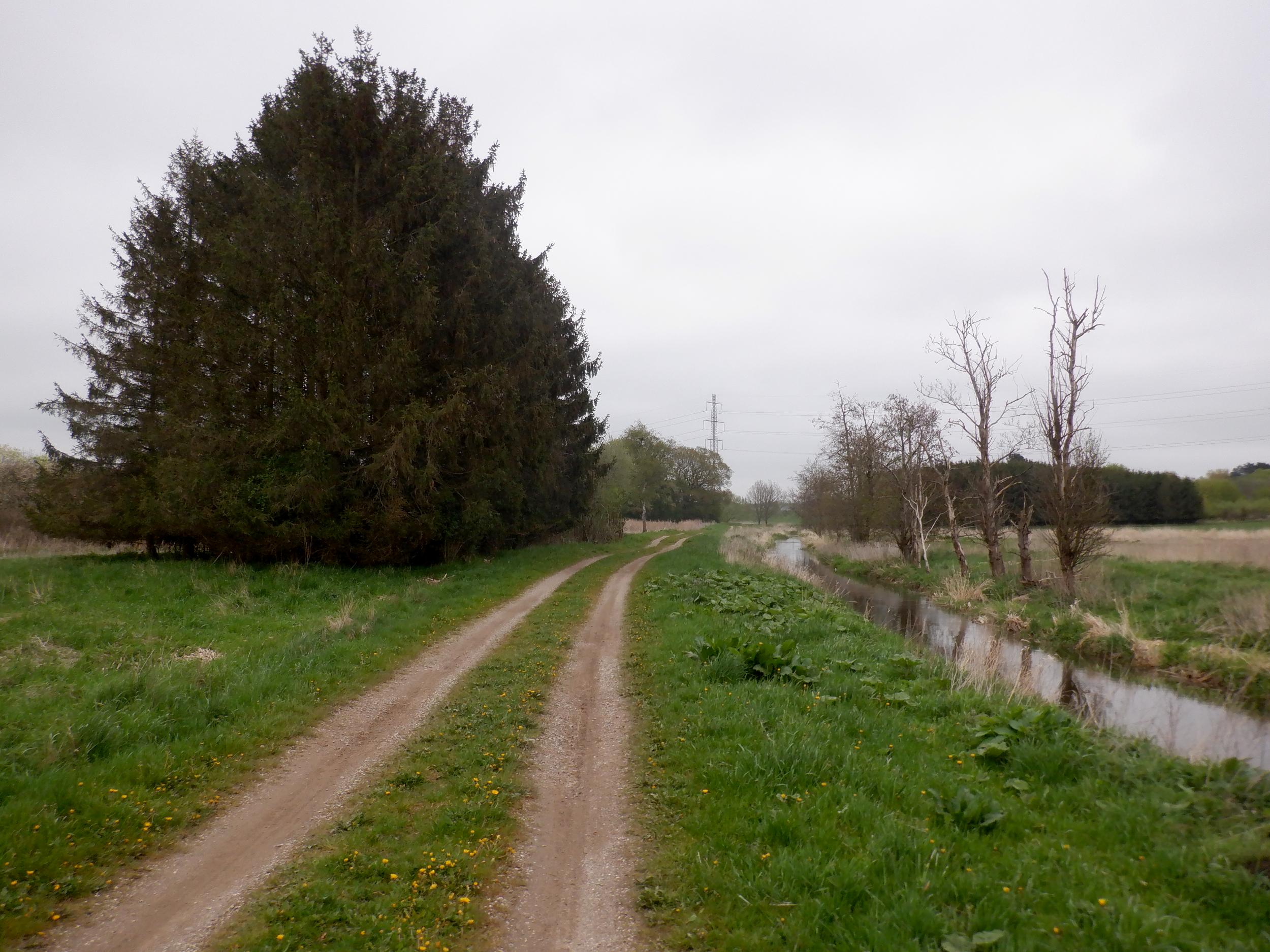 Træer, markvej og å