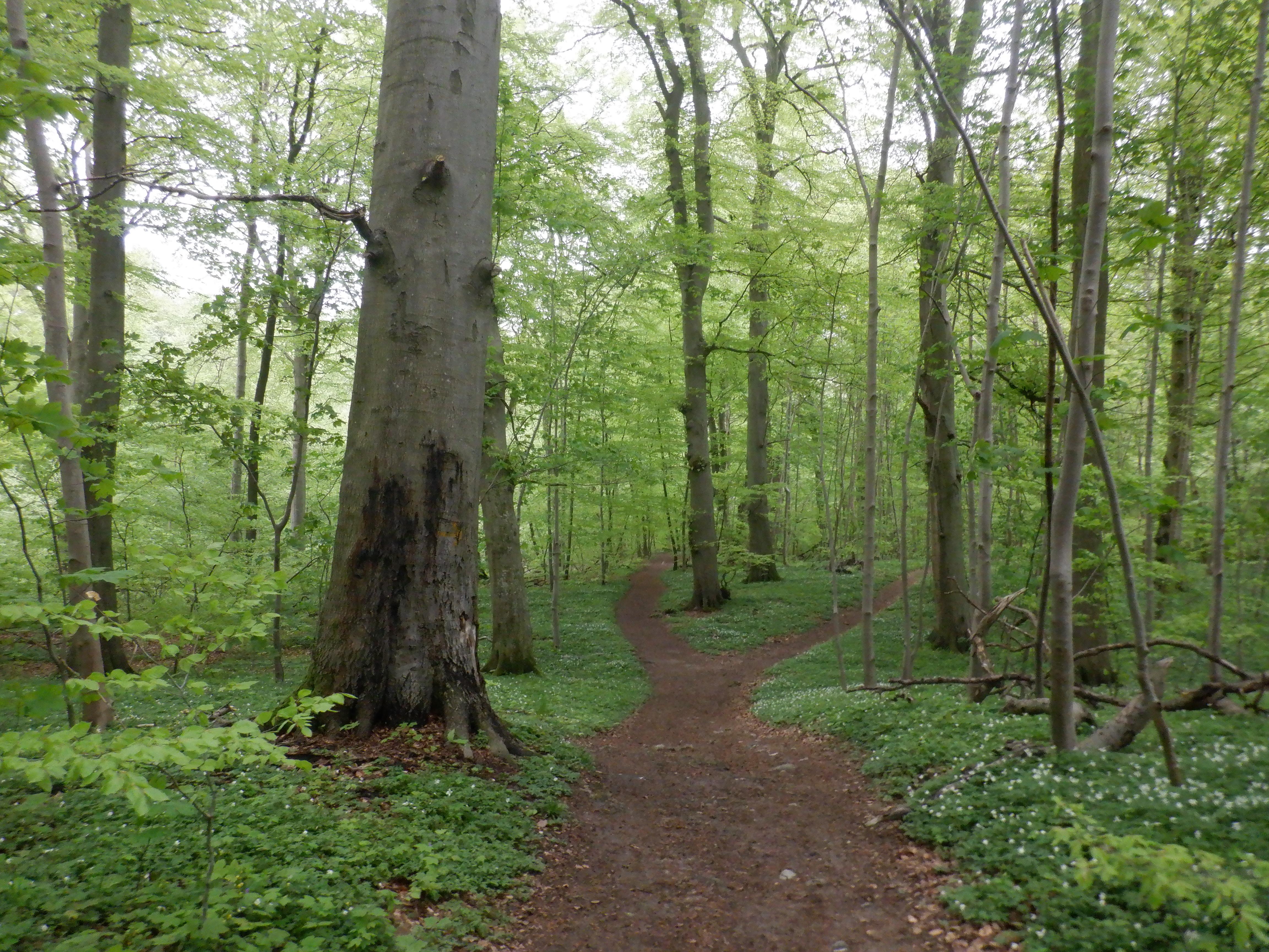Skov med stier