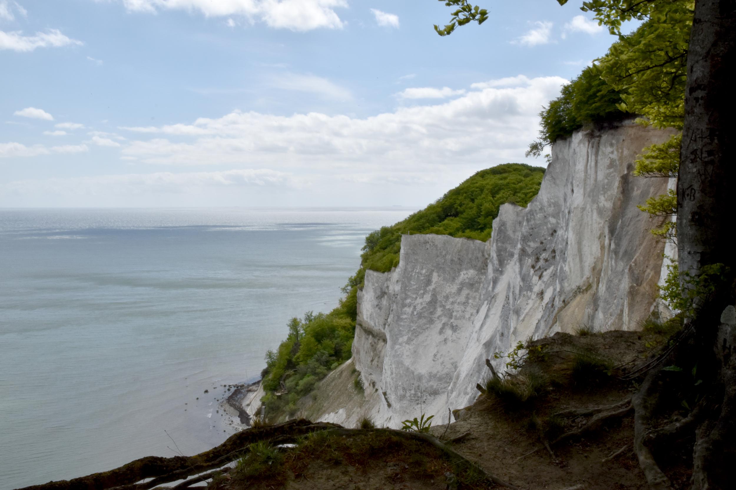 Hav og skovbeklædt klint