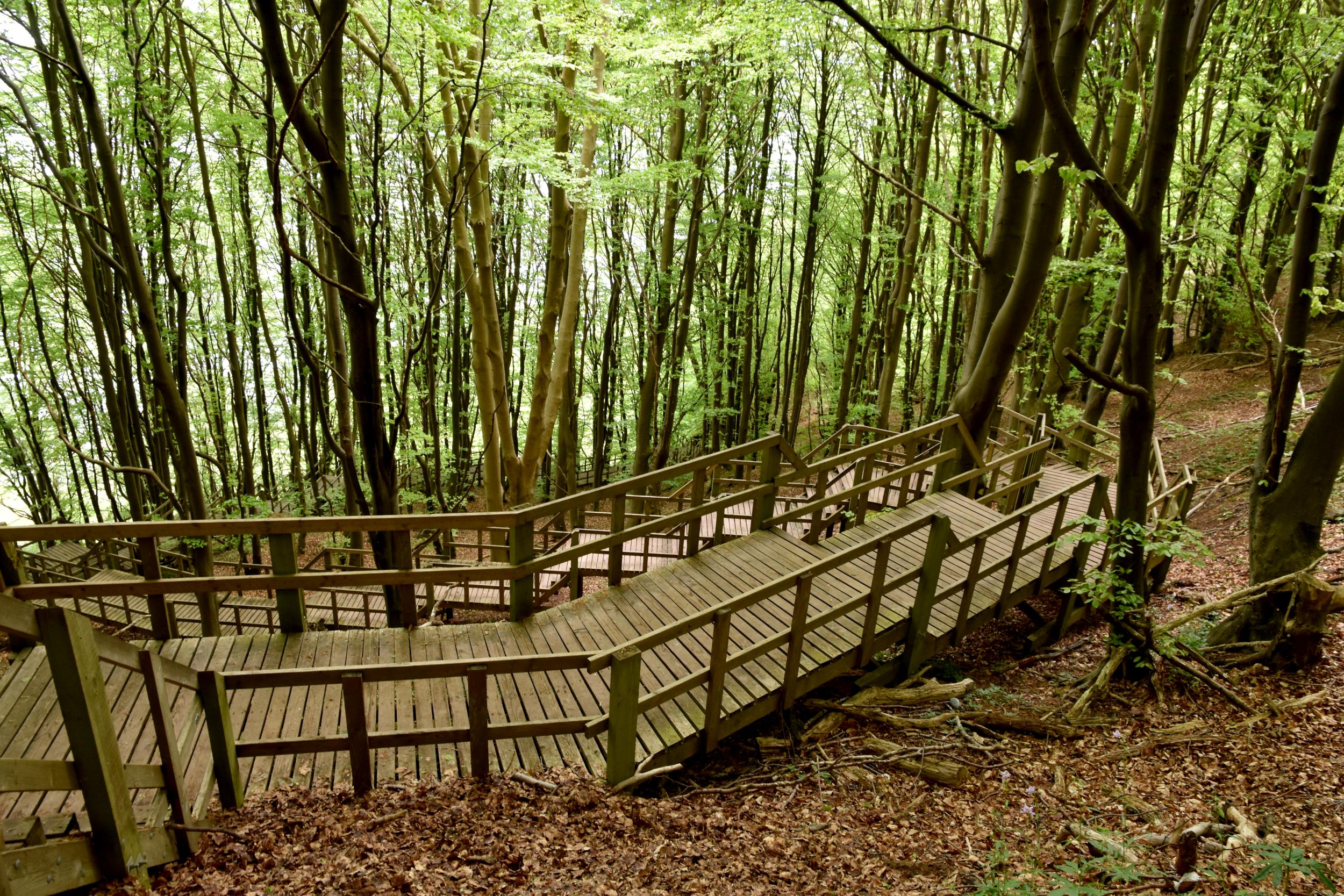 Trappe mellem træer